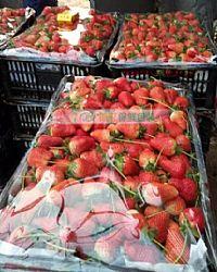草莓万博意甲ManBetX网页保鲜膜